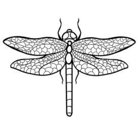 libellule