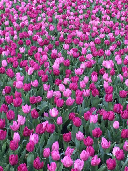 Chateau Grand Bigard_Tulipes 1_web