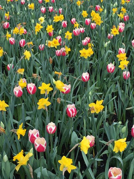 Chateau Grand Bigard_Tulipes 2_web