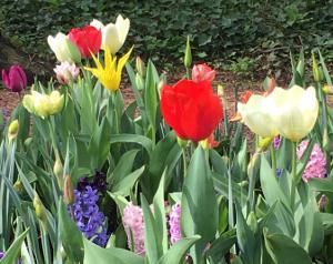 Chateau Grand Bigard_Tulipes 5_web