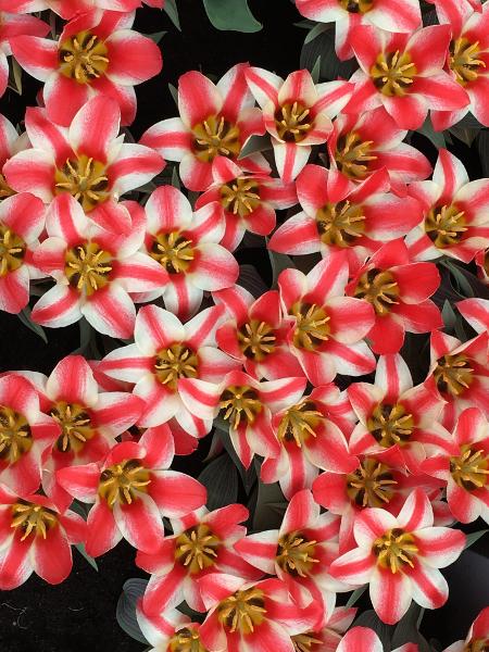 Chateau grand Bigard_Tulipes 4_web