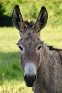 Pixabay_donkey-4282436_640