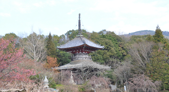 Shikoku J2_Catherine_Blog-CouleurSenior_Nikon 1 (72)