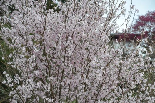 Shikoku J4_Blog_Couleur-Senior_Nikon 1 (223)