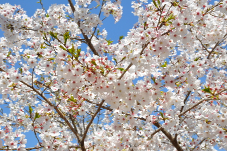 Shikoku J16_Catherine_Blog-CouleurSenior_Nikon 02 0437