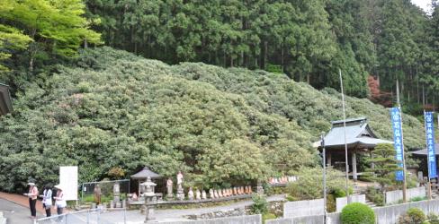 Shikoku J40_Catherine_Blog-CouleurSenior_Nikon 4 0684