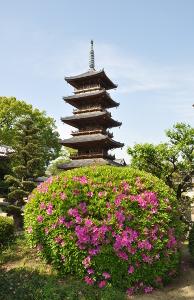 Shikoku J44_Catherine_Blog-CouleurSenior_Nikon 4 0841