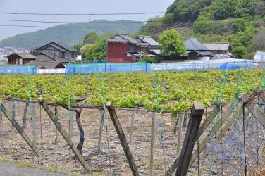 Shikoku J45_Catherine_Blog-CouleurSenior_Nikon 4 0864