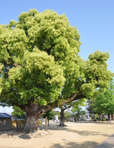 Shikoku J46_Catherine_Blog-CouleurSenior_Nikon 4 0945