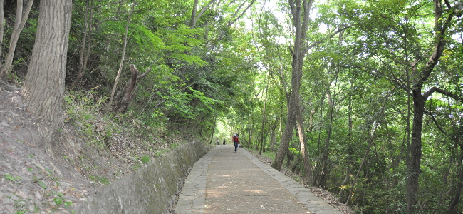 Shikoku J48_Catherine_Blog-CouleurSenior_Nikon 5 0187