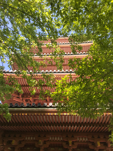 Shikoku J49_Catherine_Blog-CouleurSenior_IMG 2038