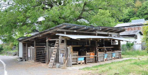 Shikoku J51 Catherine_Blog-CouleurSenior_Nikon 5 0611