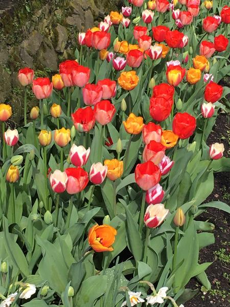 Chateau Grand Bigard_Tulipes 3_web