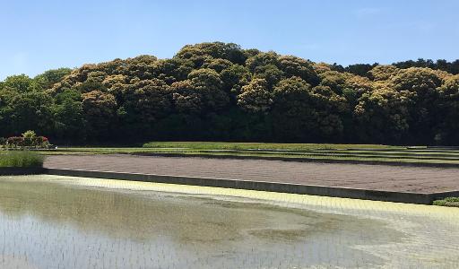 Shikoku J50_Catherine_Blog-CouleurSenior_IMG 2063